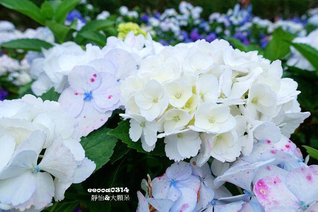 DSC05137_副本.jpg