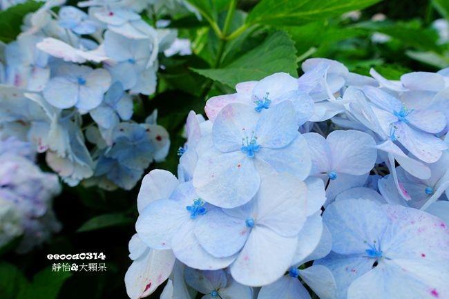 DSC05142_副本.jpg