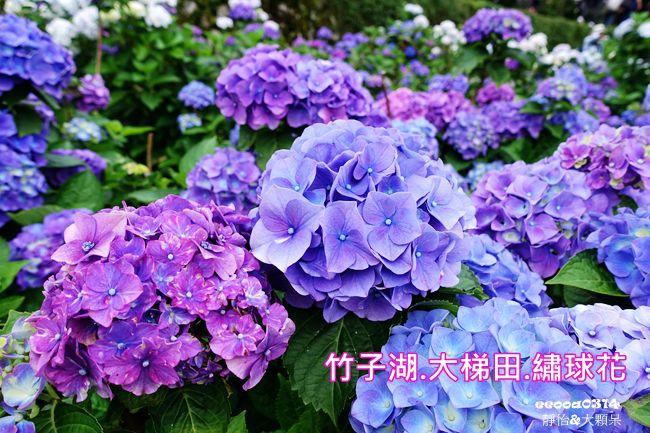 DSC02905_副本