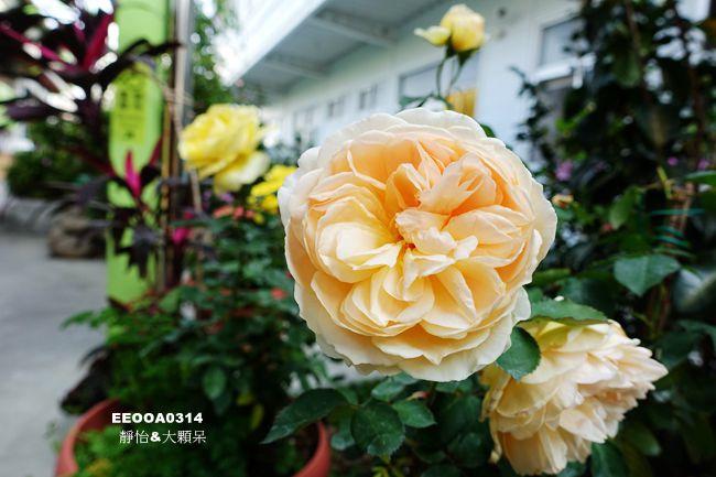 DSC09365_副本