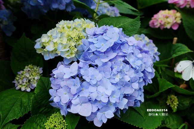 DSC03529_副本.jpg