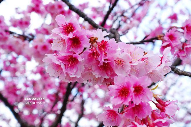 DSC01130_副本.jpg