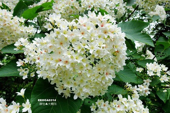 DSC01398_副本.jpg