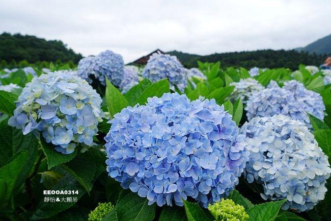 DSC04397_副本.jpg