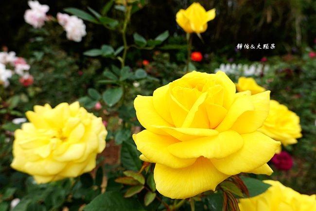 DSC04136_副本.jpg