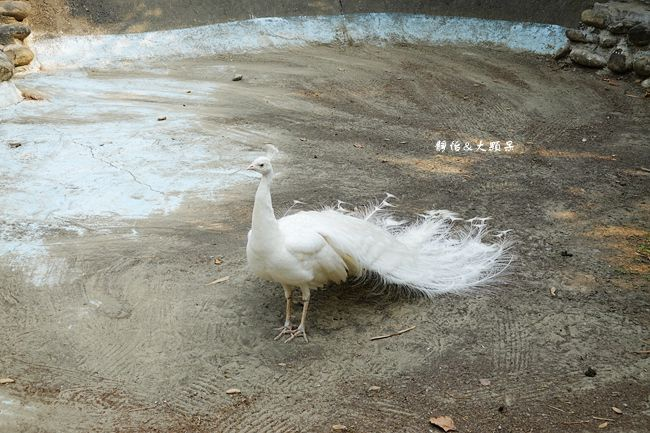 DSC05109_副本.jpg