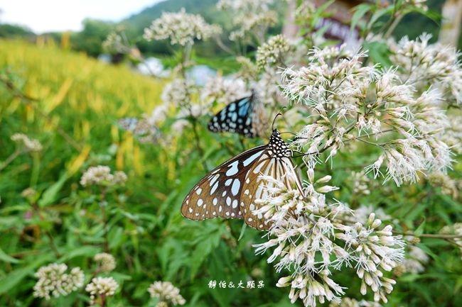 DSC02849_副本.jpg