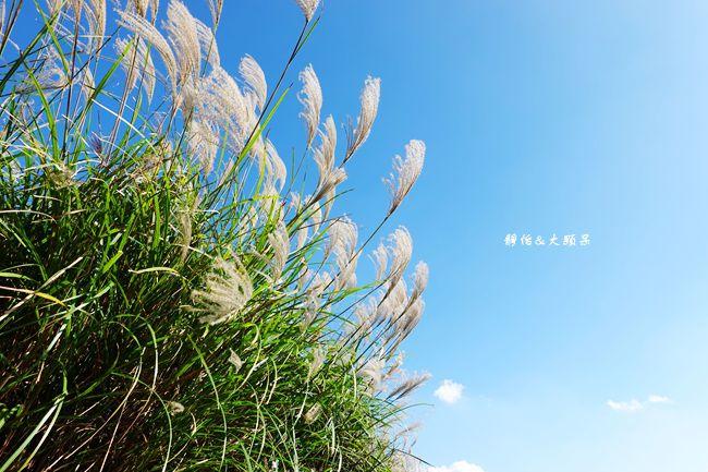 DSC02041_副本.jpg
