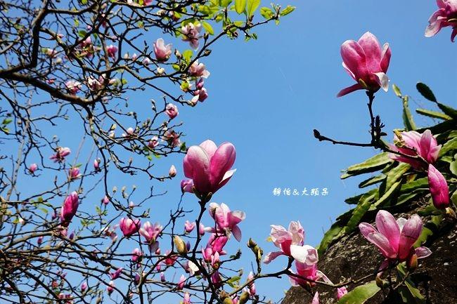 DSC01950_副本.jpg