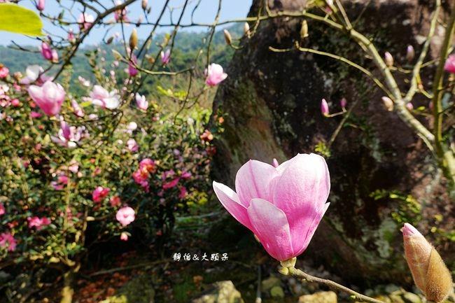 DSC01959_副本.jpg