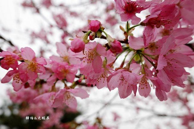 DSC02946_副本.jpg