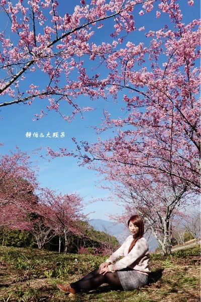 DSC04201_副本.jpg