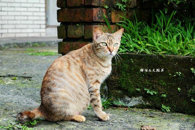 DSC09448_副本.jpg