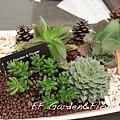 多肉植物組合2 (2).jpg