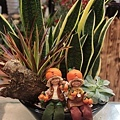 虎尾蘭桌上型盆栽 (2).jpg