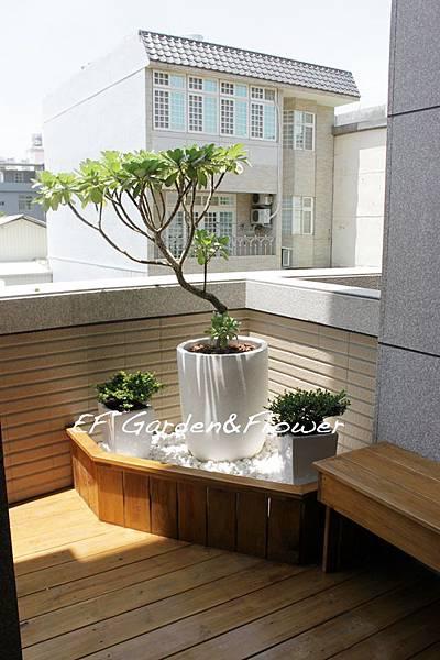 白水木搭配水磨石盆