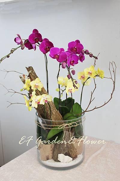 玻璃蘭花設計 007.jpg