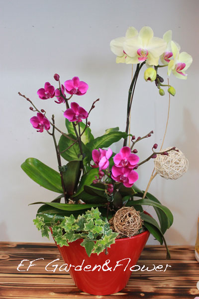 蘭花組合2.jpg