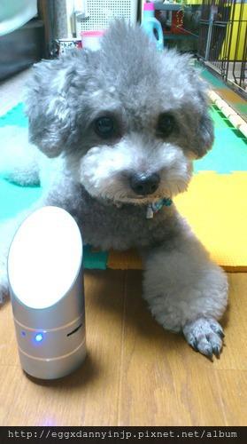 日本代購電器 - 聽說很夯的 Burutta Bluetooth Vibration Speaker(藍芽共振喇叭) CAV Japan BuruTta 6