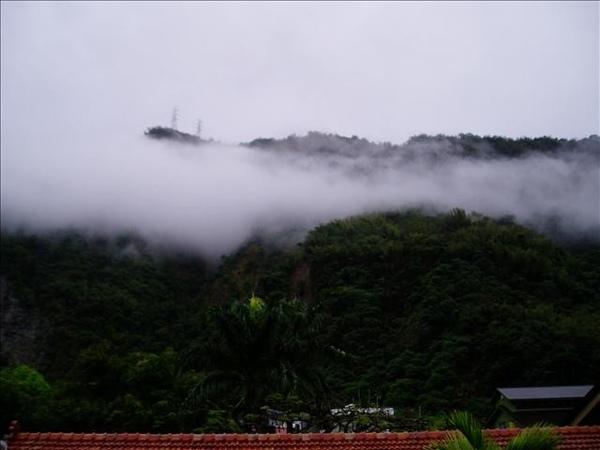 今天山裡的物很濃...還下著小雨