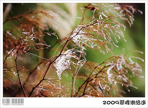 翠峰湖半日遊26
