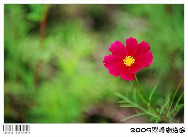 翠峰湖半日遊39