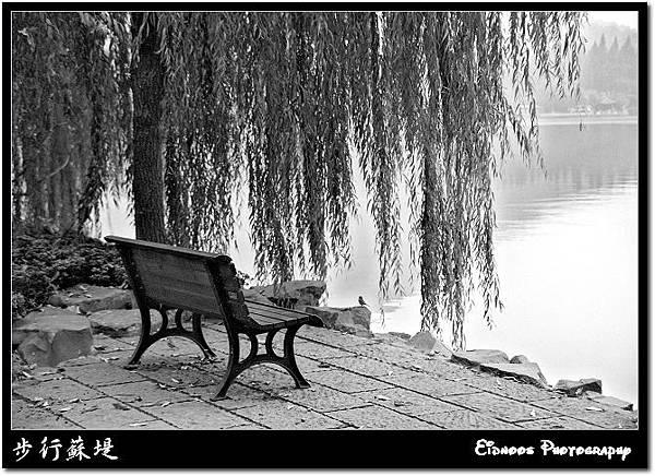 蘇堤旁的椅子