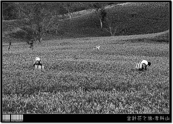 赤科山Presto+2_09