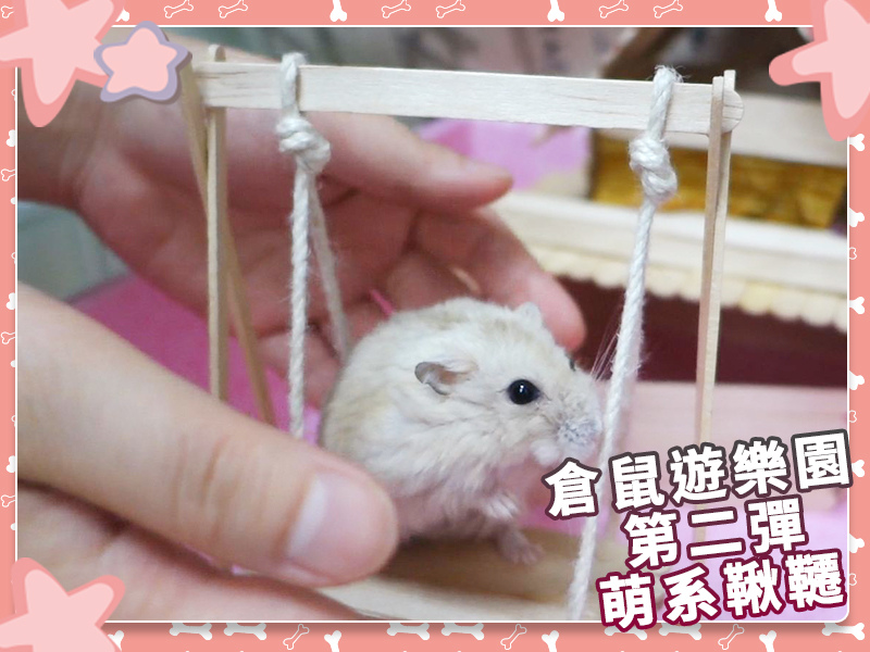DIY_手作_寵物_倉鼠01.jpg