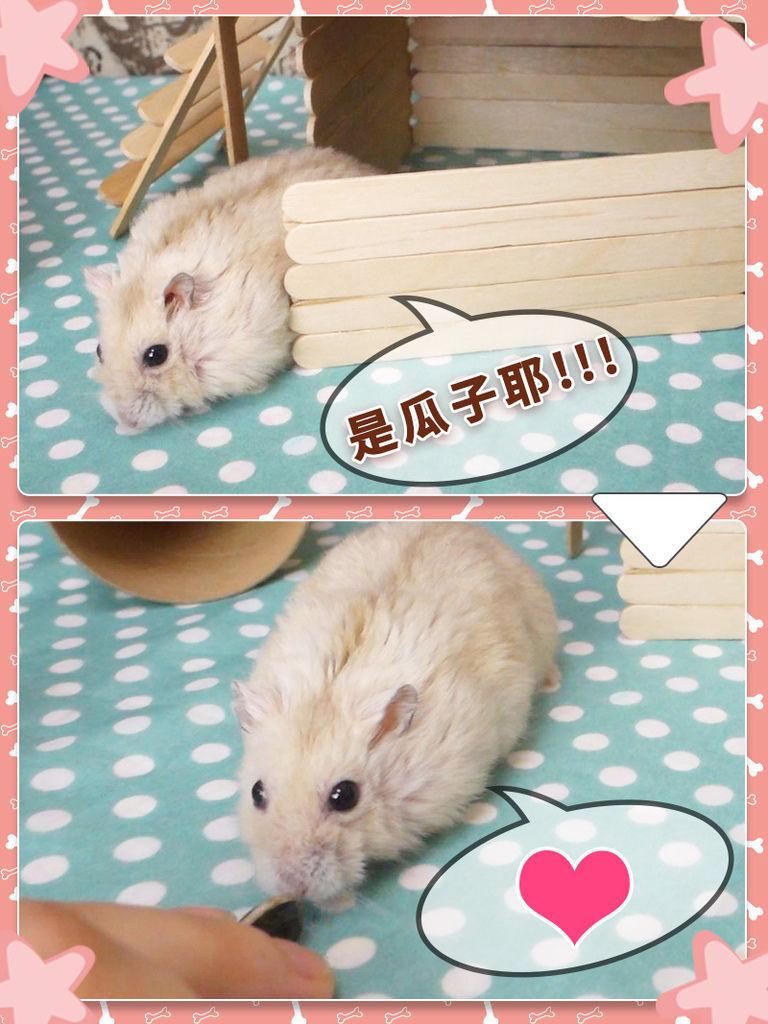 DIY_手作_寵物_倉鼠22.jpg