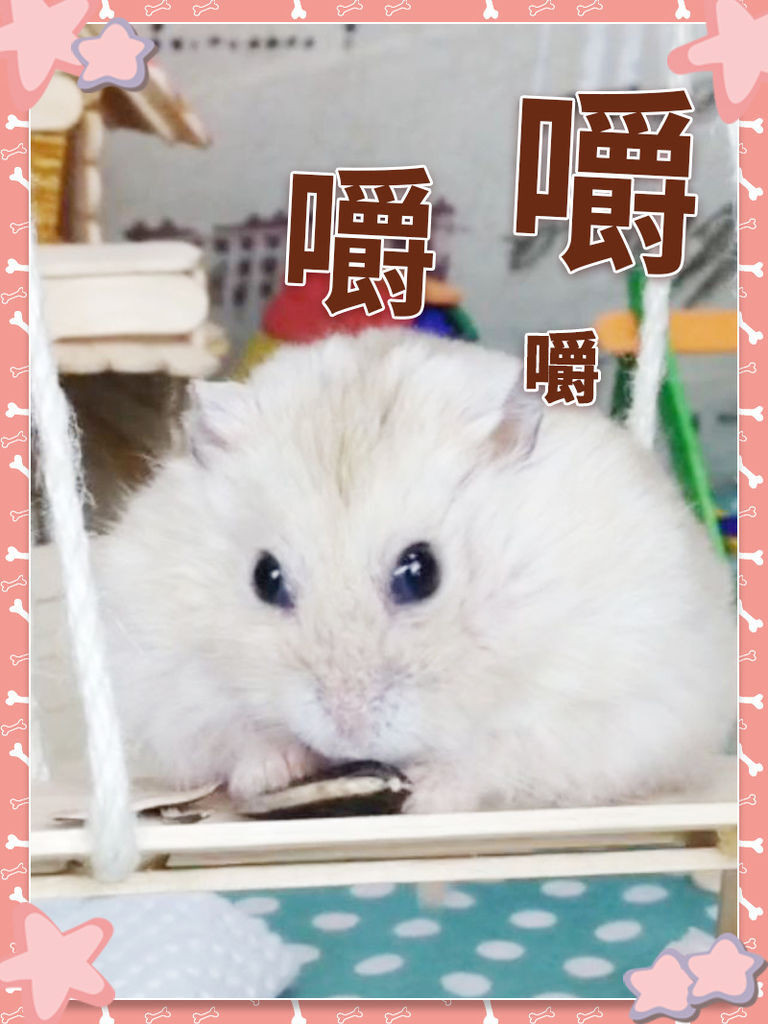 DIY_手作_寵物_倉鼠23.jpg