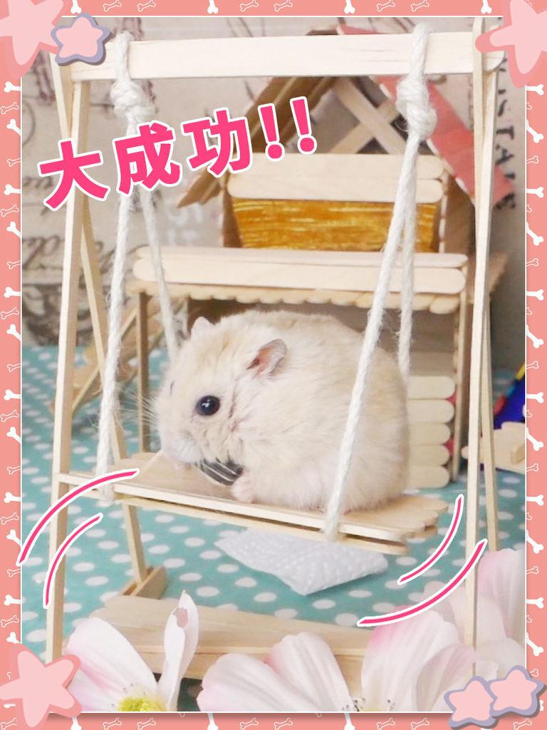 DIY_手作_寵物_倉鼠25.jpg