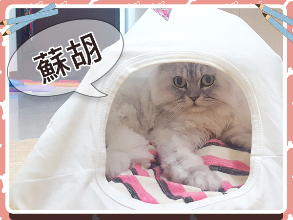 寵物_貓_貓奴_毛小孩_手作19.jpg
