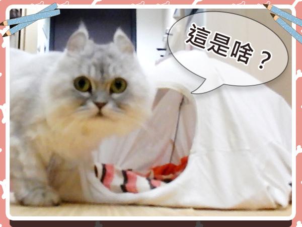 寵物_貓_貓奴_毛小孩_手作16.jpg