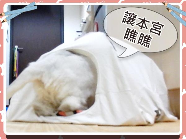 寵物_貓_貓奴_毛小孩_手作17.jpg