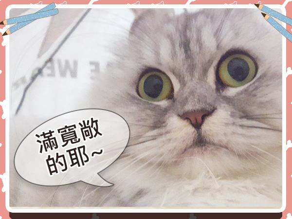 寵物_貓_貓奴_毛小孩_手作18.jpg