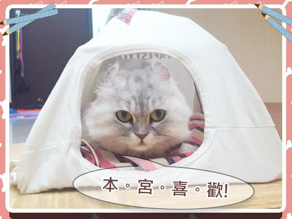 寵物_貓_貓奴_毛小孩_手作21.jpg