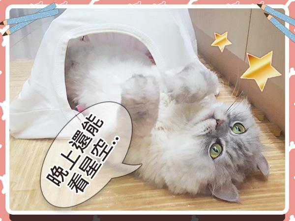 寵物_貓_貓奴_毛小孩_手作20.jpg