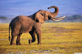 大象粗皮.jpg