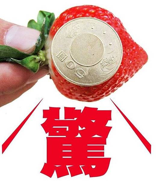 日本空運草莓2