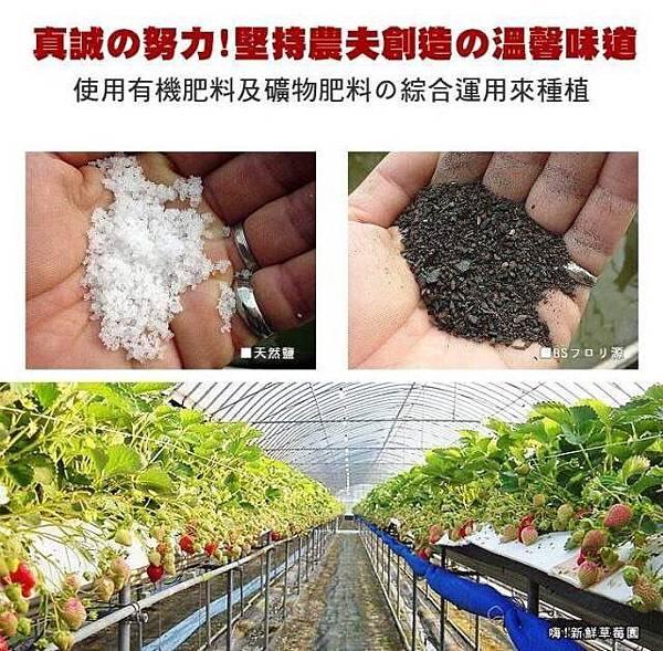 日本空運草莓3