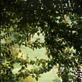 20120325_07
