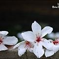20110502_18.jpg