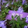 20110502_lavender15.jpg