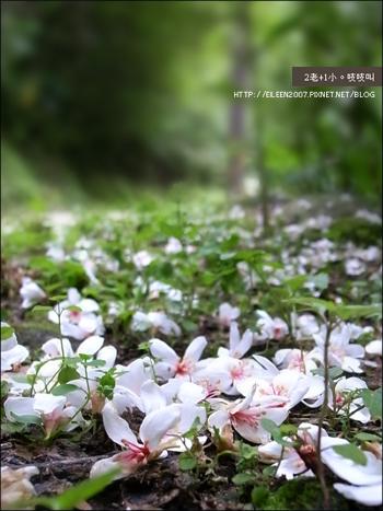 980501_flower03.jpg