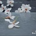 20110502_lavender44.jpg