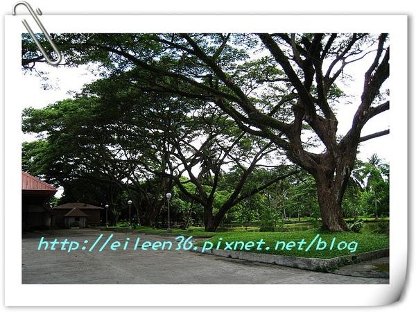 菲律賓0107.jpg