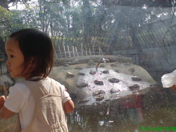 2006/10/19 小小妞最愛看的鱷魚