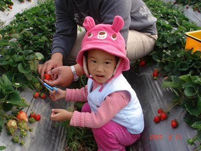 馬麻~你看我剪草莓唷!!