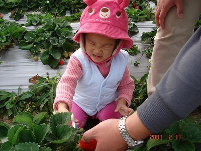 ㄚˇ....大顆草莓~所以得用力剪阿